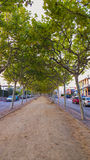 Boulevard mit Bäumen Lizenzfreie Stockbilder