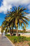 Boulevard with palm trees against the blue sky and cloud Royalty Free Stock Photography