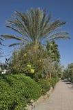 Boulevard in Sharm el-Sheikh. Egypt.  Stock Photo