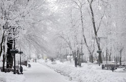 Boulevard in the snow. Photo was taken during the winter on the Donetsk street in February 2014, Ukraine Royalty Free Stock Images