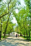 Boulevard. Summer city boulevard with green trees stock photography