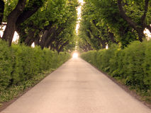 Boulevard trees Royalty Free Stock Photography