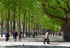 Boulevard verde Immagini Stock Libere da Diritti