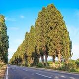 Boulevarden för den Bolgheri landskap den berömda cypressestreen. Tuscany landmark, Italien royaltyfri bild