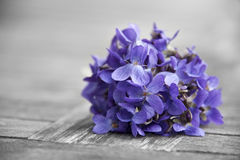 Bounch of spring violets Royalty Free Stock Photography