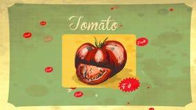 Retro styled tomato design hand drawn with pencil