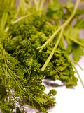 Bound green parsley Royalty Free Stock Images