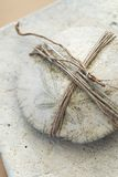 Bound Sand Dollar. Sand dollar bound by the long root of a dune plant. Still life photograph on organic white surface stock image