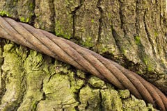 Bound tree Royalty Free Stock Images