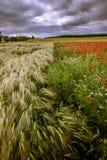 Boundaries between fields. Royalty Free Stock Image