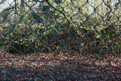 Boundaries of the forest, chain link fence royalty free stock photography