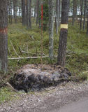 The boundary of area, marking of the forestland. Stock Image