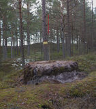 The boundary of area, marking of the forestland. Stock Images