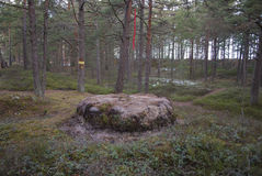 The boundary of area, marking of the forestland. Royalty Free Stock Images