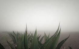 Boundary. The border lines in the mexican agricultural landscape Royalty Free Stock Photography