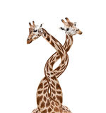 Bounded giraffes Stock Photo