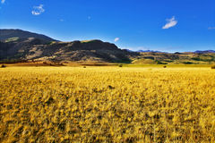 Boundless field. Royalty Free Stock Image