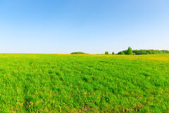 Boundless field of fine day. Boundless field of fine spring day Royalty Free Stock Photos