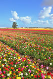 Boundless field sown with flowers Stock Images