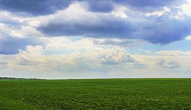 Boundless field. Summer landscape with a view of the boundless field and sky with clouds Stock Photo