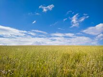 Boundless field to the horizon line. Boundless field horizon line summer steppe meadow wild pasture beautiful plase place background nature blue sky agriculture royalty free stock photo