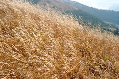 Boundless Grassland. Scene of grassland in mountain areas, the photo was taken in autumn Stock Photo