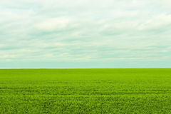 The boundless green field Royalty Free Stock Photo