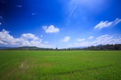 Boundless Rice Field Hills on Skyline Blue Sky Clouds. Boundless green rice field with hills on skyline against blue sky with white cumulus clouds Royalty Free Stock Photos
