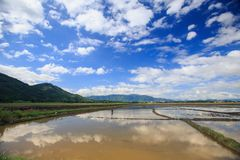 Boundless Water Rice Fields in Vietnam under Blue Sky. Boundless water rice fields vanish into space against hills on horizon and blue cloudy sky in Vietnam Royalty Free Stock Photos