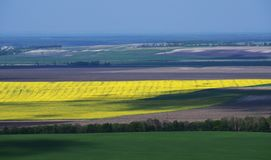 Boundless yellow, green and grey fields separated by trees stock photography