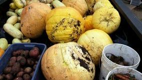 Bountiful Garden Harvest in Manitoba royalty free stock image