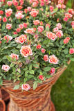 bouqet ο κήπος αυξήθηκε Στοκ φωτογραφίες με δικαίωμα ελεύθερης χρήσης