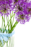 Bouqet of Allium / isolated on white Stock Photography