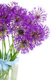 Bouqet of Allium / isolated on white Royalty Free Stock Photos