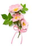 Bouqet color de rosa del perro Fotografía de archivo libre de regalías