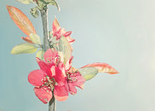 Bouqet colorido Imagenes de archivo