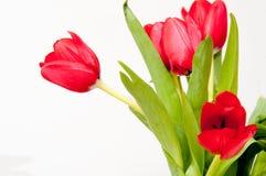 Bouqet dei tulipani rossi Fotografia Stock