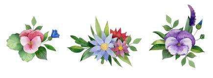 Bouqet del pensamiento, de flores salvajes y de hojas del verde Libre Illustration