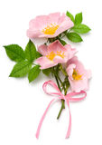 Bouqet di rosa del cane Fotografia Stock Libera da Diritti