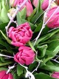 Bouqet heldere roze tulpen in groene bladeren stock foto