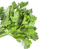 Bouqet of Parsley. On white with lots of copyspace stock image