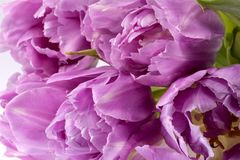 Bouqet of pink tulip flowers, close up.  royalty free stock images