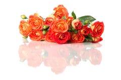 Bouqet pomarańcze róży kwiaty zamyka w górę odosobnionego na białym backgr Zdjęcie Stock