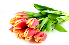 Bouqet red with yellow tulips Royalty Free Stock Images