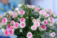 Bouqet of roses. Gift bouqet of beautiful flowers on the holiday table royalty free stock images