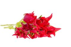 Bouqet of spring flowers red tulip isolated on white background, close up. Bouqet of spring flowers red tulip isolated on white background, close up royalty free stock photo
