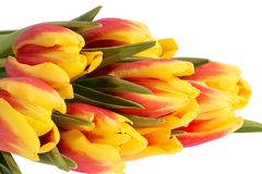 Bouqet of spring flowers yellow - red tulip isolated on white background, close up.  royalty free stock photos