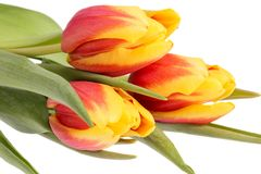 Bouqet of spring flowers yellow - red tulips isolated on white background, close up. Bouqet of spring flowers yellow - red tulips isolated on white background stock image
