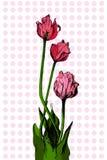 Bouqet tirado mão da tulipa Imagens de Stock