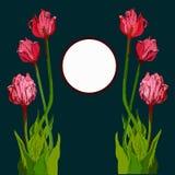 Bouqet tirado mão da tulipa Imagem de Stock